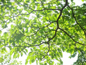 4/30金丸の森 みずき光