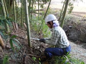 竹林整備2